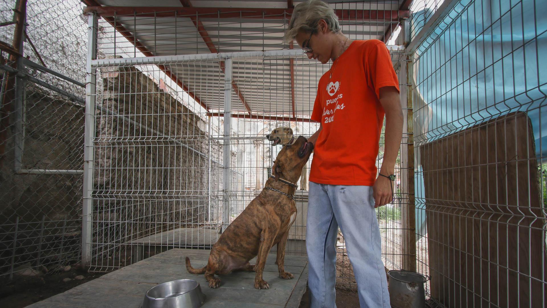 Alex, un empleado de Fundación Animare, con uno de los perros rescatados. Foto: Juan José Plascencia